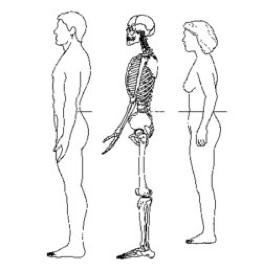 Slika 2. Obseg pasu merimo v srednji točki med spodnjim robom rebrnega loka in grebenom črevične kosti, kar predstavlja višino popka. Obseg bokov pa merimo na najširšem delu bokov (Razmerje med obsegom pasu in bokov, 2015).